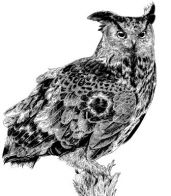 Great_Horned_Owl_on_post_sml.jpg
